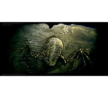Mythical Flying Trilobite Fossil II Photographic Print