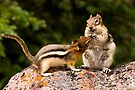 WHO SAY'S I'M SHARING? by Sandy Stewart