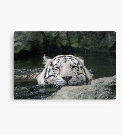 Bengal Tiger in Water  - Panthera tigris tigris Canvas Print