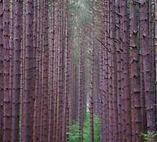 Tree Lines by chazz