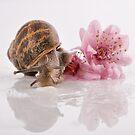 Snail & Blossom by Samantha Cole-Surjan