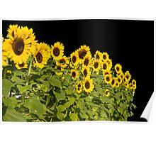 Black Sky Sunny Poster