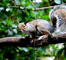 squirrel piccie by AngelaFoster