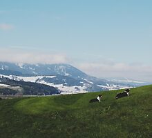 Where Winter meets Summer by vincentbrod