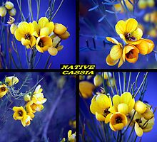Native Flowers  by robert murray