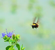 Coming In For A Landing! by Catherine  Howell