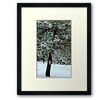 Frosted Pine dedicated to finding winter beauty Framed Print