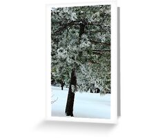 Frosted Pine dedicated to finding winter beauty Greeting Card