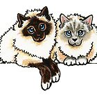 2 Birman by offleashart