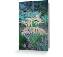 Enchanted Forest - Look Got A New Dress Greeting Card
