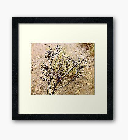 Beach Weeds Framed Print