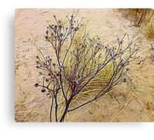 Beach Weeds Canvas Print