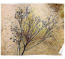 Beach Weeds Poster
