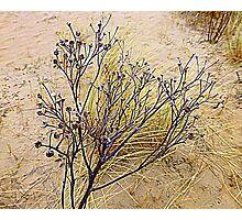 Beach Weeds Photographic Print