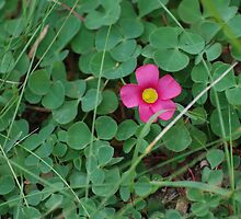 Little pink flower blushing between the greens. by Michelle *
