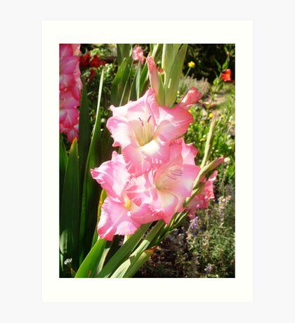 Pink Gladiola Art Print