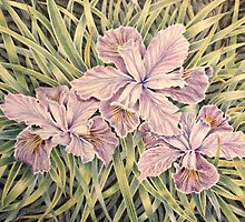 Mum's Iris by Ann Nightingale