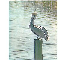 Pelican Roost Photographic Print