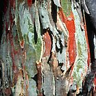 Black Sallee Bark by Ern Mainka