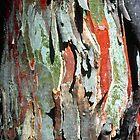 Black Sallee Bark by Ern Mainka
