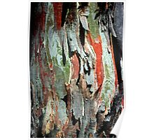 Black Sallee Bark Poster