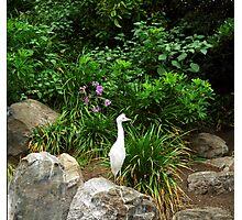 White Egret Photographic Print