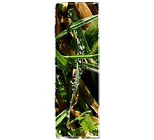 Grass Drops Photographic Print