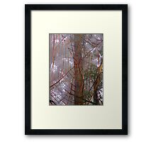 Spiderweb in the mist Framed Print