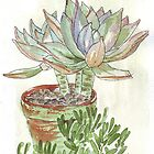 "Graptoveria ""Fred Ives"" by Maree  Clarkson"