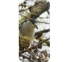 Black-crowned Nigh Heron; Fullerton, CA USA iPhone Case/Skin