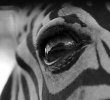 Zebra Eye by EmmaLeigh