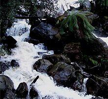 photoj Tas Columbian Falls by photoj