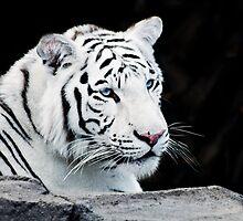 White Tiger by apriljd