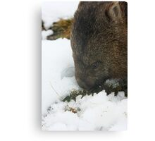 wombat Canvas Print