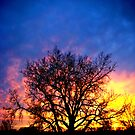 Rainbow Tree by Evan Ludes