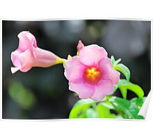 Lovely pink flowers Poster