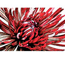 Red Crazy Flower Photographic Print