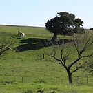 Pasture Shade Tree White Horse by Sandra Gray
