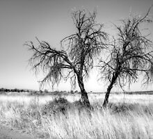 Beside the track,Namibia. by Elisabeth Thorn