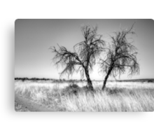 Beside the track,Namibia. Canvas Print