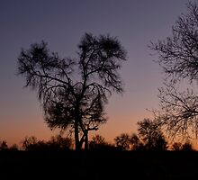 Namibia,after sunset. by Elisabeth Thorn