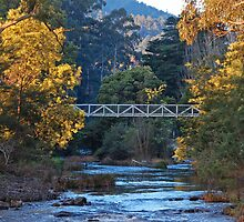 The Yarra River at Warburton by Peter Hammer