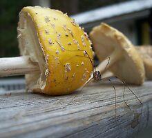 Mushroom Spider by ShaneMckenzie