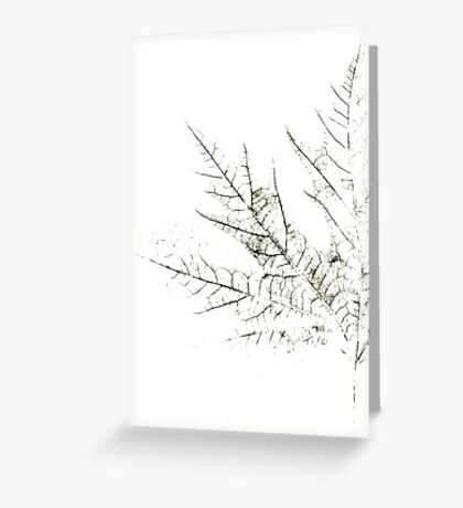 Mapple Leaf in White Greeting Card