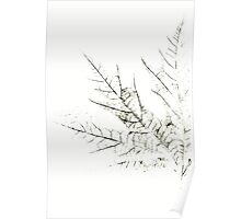 Mapple Leaf in White Poster
