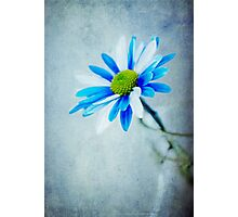 Blue & White  Photographic Print