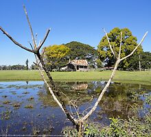 Rustic Shack Reflection, Pacific Highway, Australia 2011 by muz2142