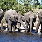 Elephants - And Baby came too by Braedene