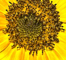 Sunflower Center by Gaby Swanson  Photography
