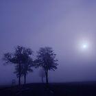 A November morning by natureloving